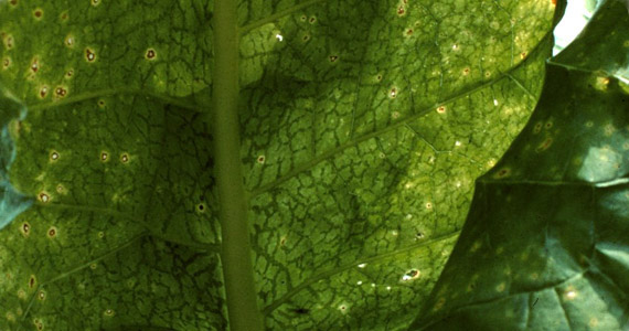 articles-pests-diseases-aphids_text_2.jp