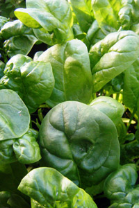 Grow it yourself: Spinach