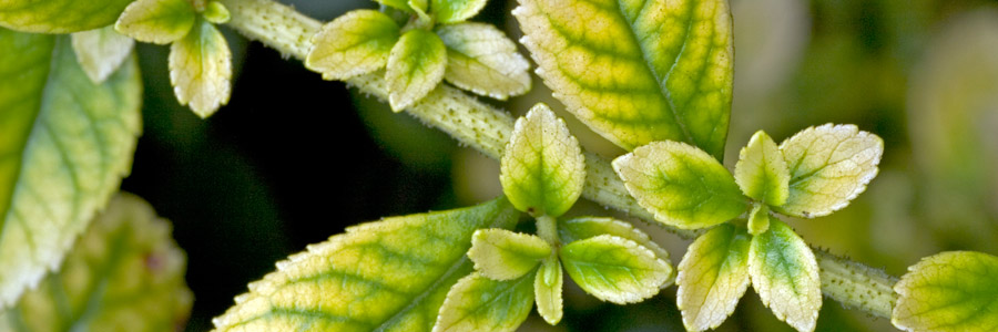 articles-pests-diseases-aphids_banner_1.