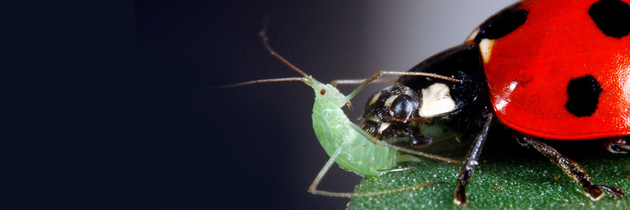 articles-pests-diseases-aphids_banner_2.